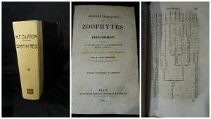 zoophytes