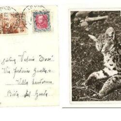 Colonie italiane cartolina affrancata con 10 cent. Etiopia n°1 Sassone + 20 cent. Eritrean°196 Sassone,
