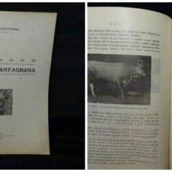 Ottavio Parisi – I bovini della Garfagnana – Lucca 1926