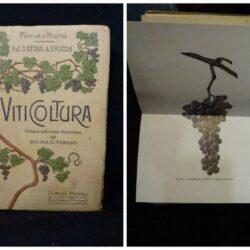 Viticoltura – Prof. O Ottavi A.Strucchi- Manuali Hoepli – Ottava edizione rinnovata 1921